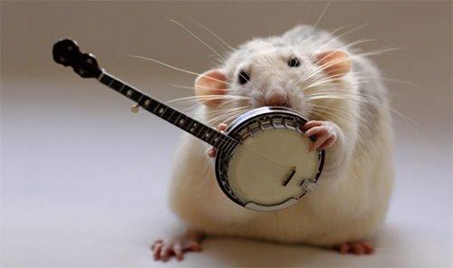 Если мы были бы крысами, то давно бы уже перегрызлись 6